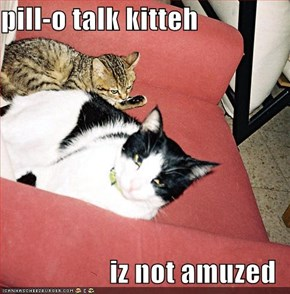 pill-o talk kitteh  iz not amuzed