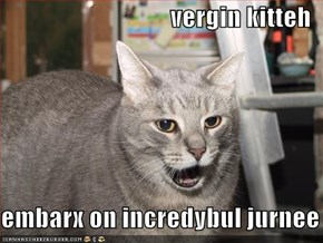 vergin kitteh   embarx on incredybul jurnee