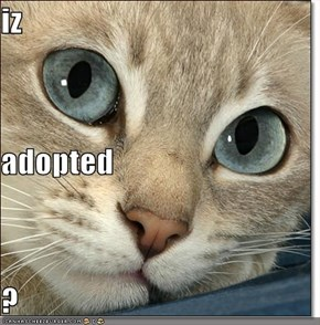 iz adopted ?