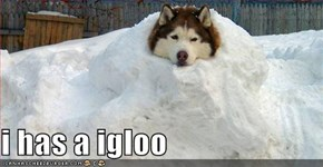 i has a igloo