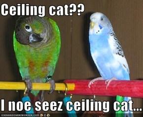Ceiling cat??  I noe seez ceiling cat...