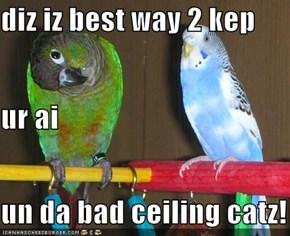 diz iz best way 2 kep  ur ai un da bad ceiling catz!
