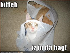 kitteh  iz in da bag!