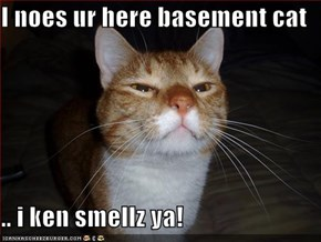 I noes ur here basement cat  .. i ken smellz ya!