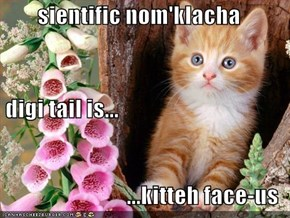 sientific nom'klacha  digi tail is...  ...kitteh face-us