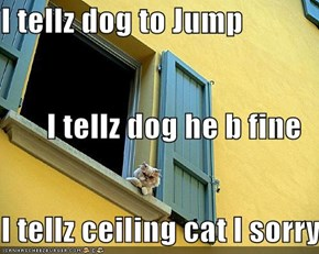 I tellz dog to Jump I tellz dog he b fine I tellz ceiling cat I sorry