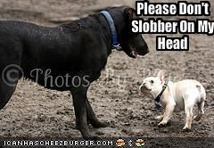 Please Don't Slobber On My Head