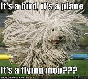 It's a bird, it's a plane  It's a flying mop???