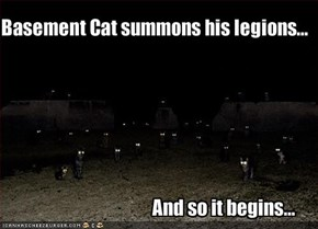 Basement Cat summons his legions...