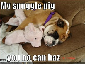My snuggle pig  ... you no can haz