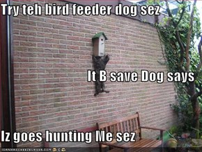 Try teh bird feeder dog sez It B save Dog says Iz goes hunting Me sez