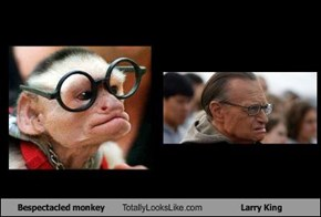 Bespectacled monkey Totally Looks Like Larry King