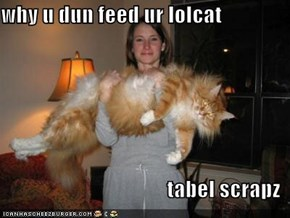 why u dun feed ur lolcat  tabel scrapz