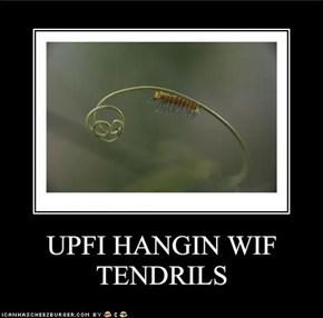 UPFI HANGIN WIF TENDRILS