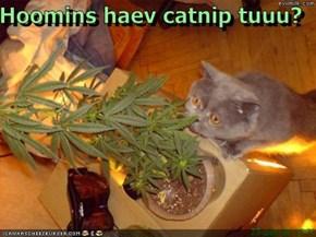 Hoomins haev catnip tuuu?