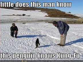 little does this man know  this penguin knows Kung-Fu