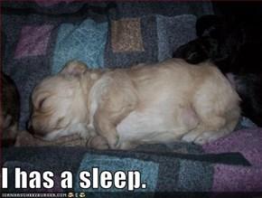 I has a sleep.