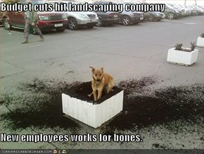 Budget cuts hit landscaping company  New employees works for bones.