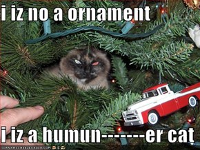 i iz no a ornament  i iz a humun-------er cat