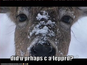 did u prhaps c a lepprd?