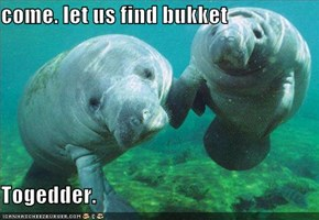 come. let us find bukket  Togedder.