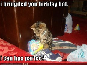 i bringded you birfday hat.  i can has partee?