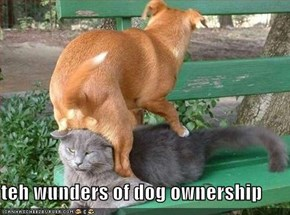 teh wunders of dog ownership