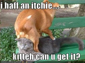 i haff an itchie....  kitteh can u get it?