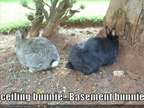 ceiling bunnie...Basement bunnie