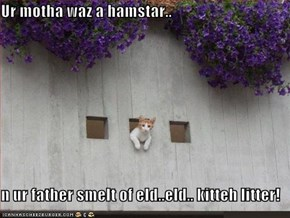 Ur motha waz a hamstar..  n ur father smelt of eld..eld.. kitteh litter!