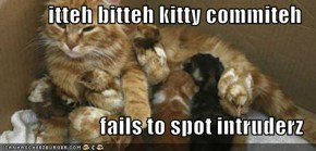 itteh bitteh kitty commiteh  fails to spot intruderz