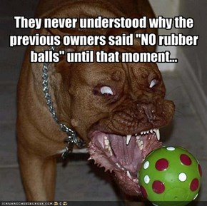 "They never understood why the previous owners said ""NO rubber balls"" until that moment..."