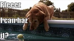 Pleeez I can haz it?