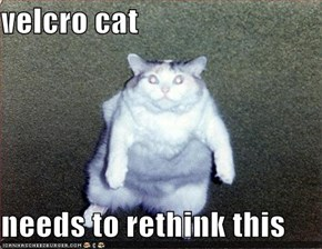 velcro cat  needs to rethink this