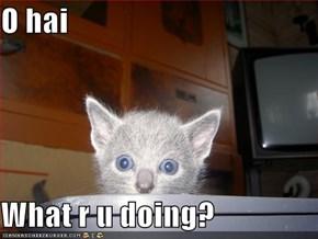 O hai   What r u doing?