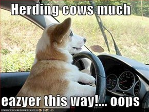 Herding cows much  eazyer this way!... oops