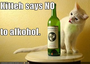 Kitteh says NO to alkohol.