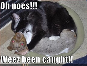 Oh noes!!!  Weez been caught!!