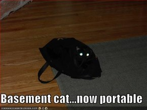 Basement cat...now portable