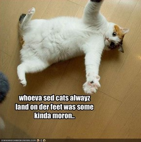 whoeva sed cats alwayz land on der feet was some kinda moron..