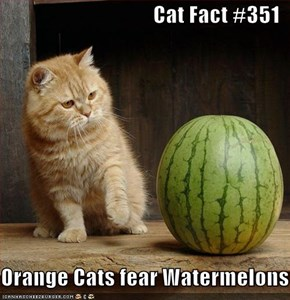 Cat Fact #351  Orange Cats fear Watermelons