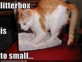 litterbox is to small...