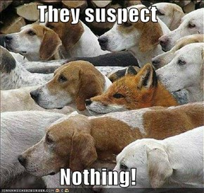 They suspect  Nothing!