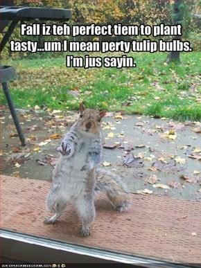 Fall iz teh perfect tiem to plant tasty...um I mean perty tulip bulbs. I'm jus sayin.