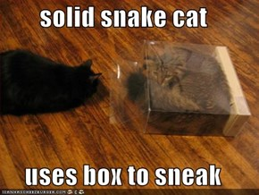 solid snake cat  uses box to sneak