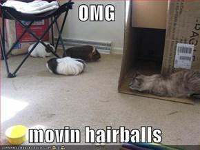 OMG  movin hairballs