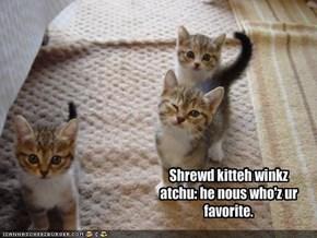Shrewd kitteh winkz atchu: he nous who'z ur favorite.