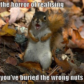 the horror of realising  you've buried the wrong nuts