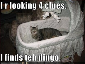 I r looking 4 clues.  I finds teh dingo.