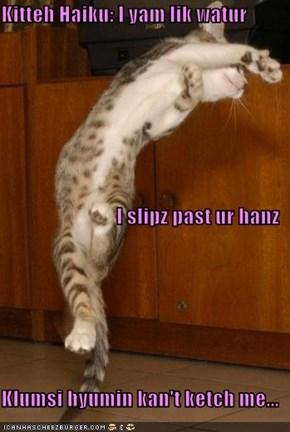 Kitteh Haiku: I yam lik watur I slipz past ur hanz Klumsi hyumin kan't ketch me...